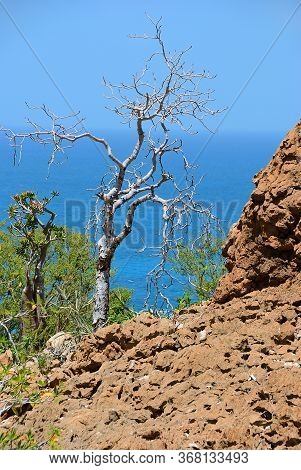 Socotra Scenery. Indian Ocean Shore With Flowering Bottle Tree And Another Endemic Plants Of Socotra