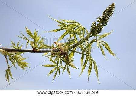 Spring time, new branch in spring time isolated against cloudy sky