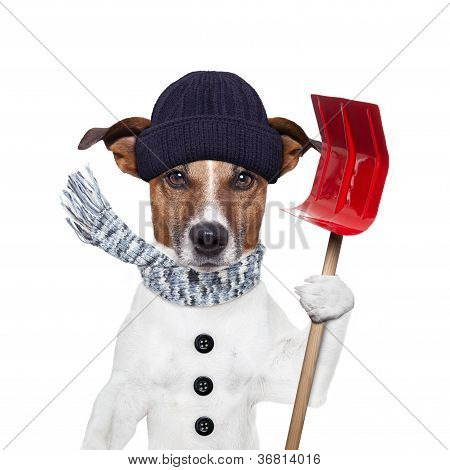Winter Dog Shovel Snow