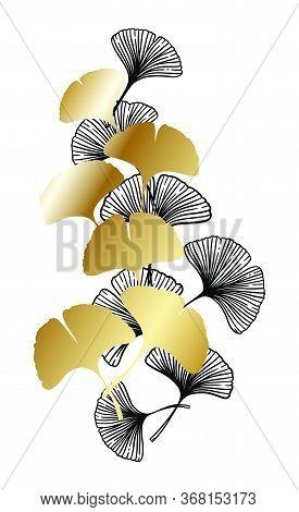 Ginkgo Or Gingko Biloba Black And Golden Leaves. Nature Botanical Gold Vector Illustration, Decorati