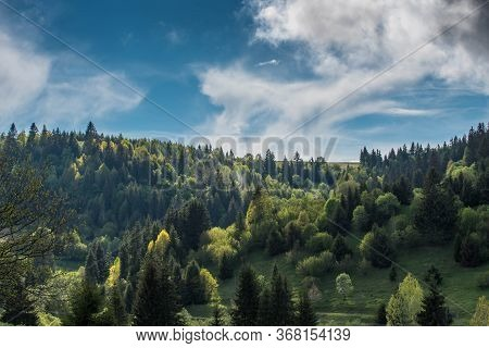 Pine Woods Meets Deciduous Woods On The Top Of The Mountain In Bright Sunshine After A Heavy Storm.