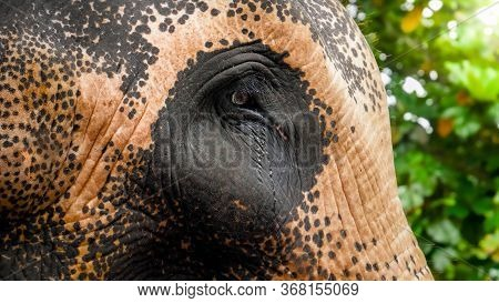 Closeup Image Of Sad Eyes Of Adult Indian Elephant In Zoo. Concept Of Animal Protection From Abuse A