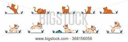 Cat Litte Kitten Vector Character Beautiful Dog.