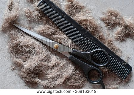 Pile Of Cut Hair, Scissors For Haircuts And Comb. Tools For Haircuts.
