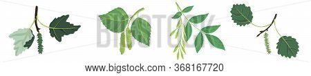 Vector Drawing Branches Of Trees With Leaves, Poplar, Birch, , Ash And Aspen, Hand Drawn Illustratio