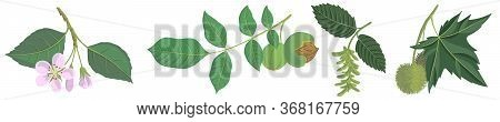 Vector Drawing Branches Of Trees With Leaves, Apple, Walnut, Hornbeam And Plane Tree, Hand Drawn Ill