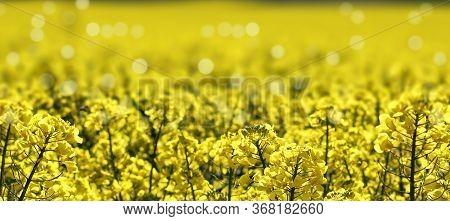 Blurr Flower Of Mustard In The Open Field.