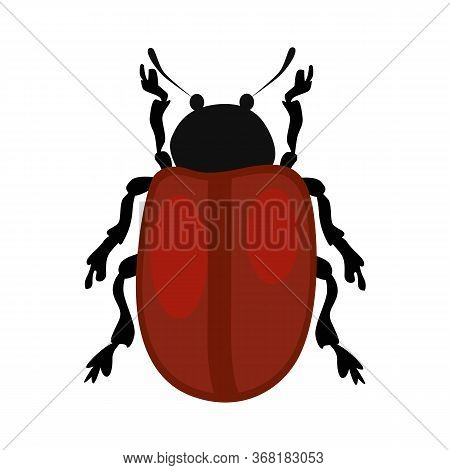 Beetle Chrysomela Populi Isolated . Bug, Wildlife, Entomology. Insects Concept. Can Be Used For Topi