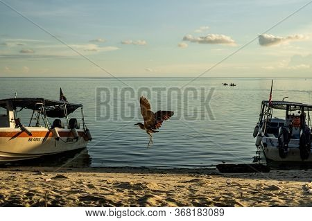 Mabul Island, Sabah, Malaysia - August 08, 2018: The Flying Bird In The Beautiful Sunlight With A Go