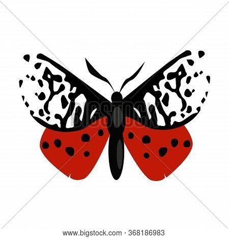 Garden Tiger Month Isolated . Butterfly, Entomology, Lepidoptera. Insects Concept. Can Be Used For T