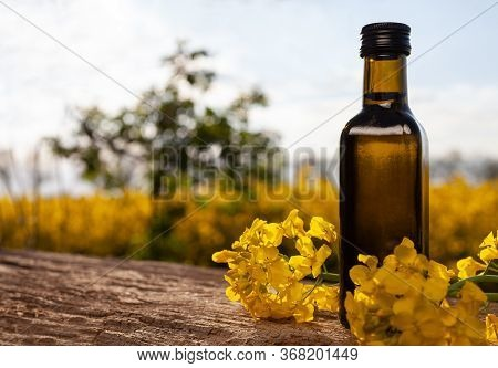 Bottle Of Rapeseed Oil (canola) And Rape Flowers Bunch On Table. Rapeseed Oil On Wooden Table In Fie