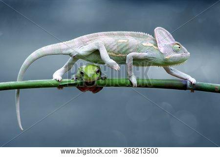 Chameleon Veiled In Leaf Stems, A Chameleon Is At The Top Of A Leaf Stem