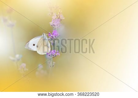 Beautiful Golden Nature Background.Floral Art Design.Macro Photography.Abstract Pastel Landscape with Copy Space.Butterfly and Lavender Field.Summer Butterfly on a Violet Flower.Creative Artistic Wallpaper.Tranquil Scene. Agricultural Meadow.Yellow Color