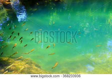 Little Fish Swim In Clean Fresh Water In The Mountain River Krka In Croatia. Natural Background Of L