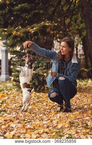 Dog And Owner Walk Autumn Park. Purebred Jack Russel Terrier Dog Outdoors In Nature On Grass On Autu