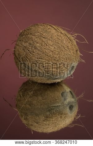 Large Shaggy Coconut Isolated On A Red Mirror Surface With Reflection. Coconut