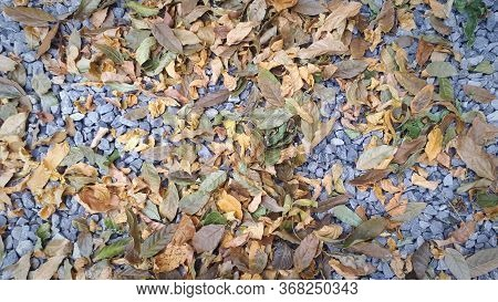 Small Road Stone Background, Dark Gravel Pebbles Stone Texture With Golden And Yellow Leaves In Autu