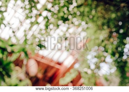 Blurred Nature Background From Tree With Green Bokeh. Green And White Background From Tree In Sun Li