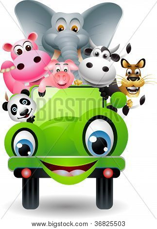 cute animal on green car