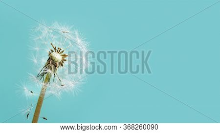 Macro Dandelion At Blue Background. Freedom To Wish. Seed Macro Closeup. Goodbye Summer. Hope And Dr