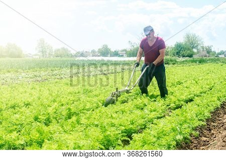 Farmer Cultivates A Carrot Plantation. Cultivating Soil. Removing Weeds And Grass. Loosening Earth T