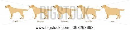Collection Of Cartoon Cute Dog Weight Stages Vector Flat Illustration. Colorful Domestic Animal Diff