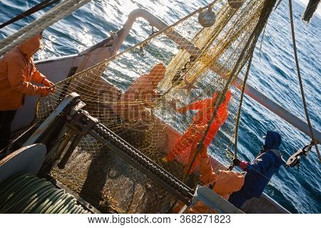 Fishermen choose a trawl with fish on board the ship in Japanese Sea