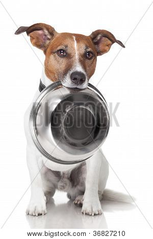 Hungry Dog Food Bowl