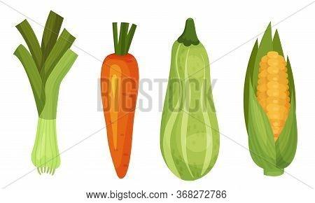 Mature Vegetables With Corn Cob And Carrot Vector Set