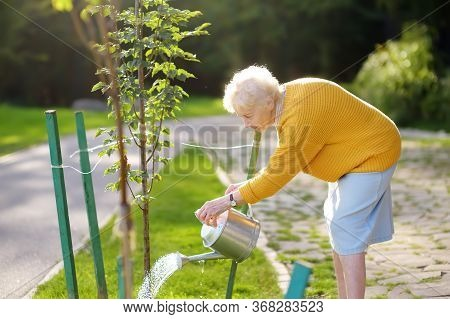 Senior Woman Volunteer Watering A Tree From Watering Can In A Public Park Or Community Garden. Carin