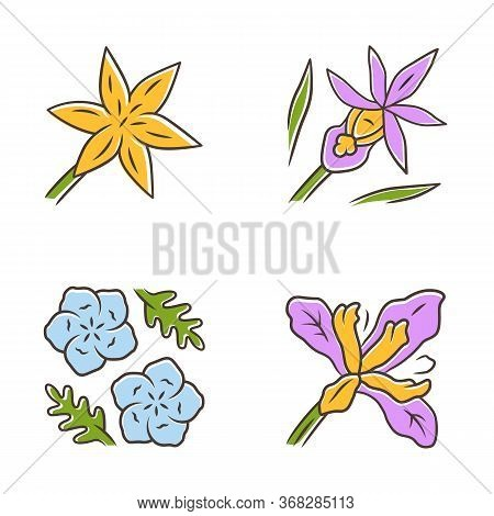 Wild Flowers Color Icons Set. Common Star Lily, Calypso Orchid, Baby Blue Eyes, Douglas Iris. Bloomi