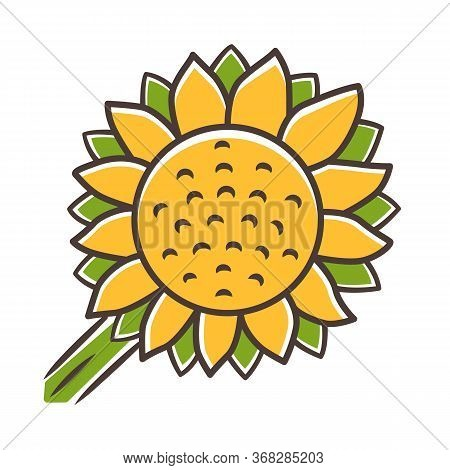 Helianthus Yellow Color Icon. Sunflower Head. Field Blooming Flower. Agriculture Symbol. Wild Plant.