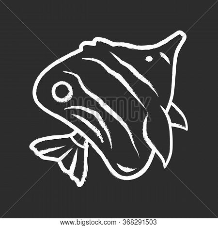 Butterflyfish Chalk Icon. Swimming Bright Colored Fish. Tropical Aquatic Animal. Marine Aquarium. Ex