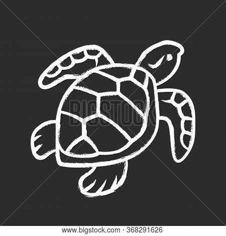Turtle Chalk Icon. Slow Moving Reptile With Scaly Shell. Underwater Aquatic Animal. Swimming Ocean C