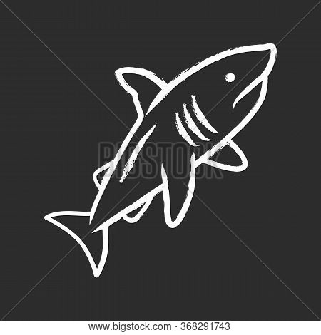 Shark Chalk Icon. Dangerous Ocean Predator. Swimming Large Fish. Underwater Aquatic Animal, Ocean Wi