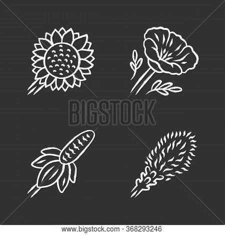 Wild Flowers Chalk Icons Set. Helianthus, California Poppy, Mexican Hat, Liatris. Blooming Wildflowe
