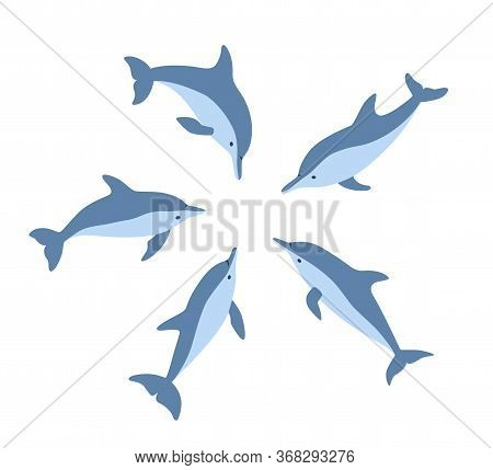 Five Dolphins In A Circle Look At One Place. Isolated Vector Illustration In Cartoon And Flat Style