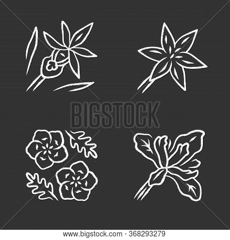 Wild Flowers Chalk Icons Set. Common Star Lily, Calypso Orchid, Baby Blue Eyes, Douglas Iris. Bloomi