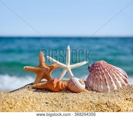 Shells And Starfish On The Beach Against The Background Of The Sea And The Blue Sky On A Hot Sunny D