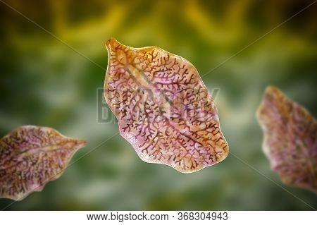 Fasciola Hepatica, Or Liver Fluke, 3d Illustration. A Parasitic Trematode Worm That Causes Fasciolos