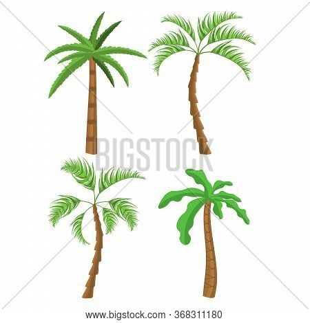 Palm Trees. Tropical Palm Trees. Exotic Palm Trees