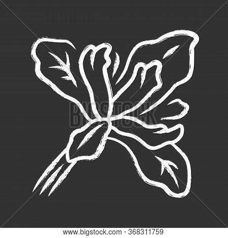Douglas Iris Plant Chalk Icon. California Blooming Wildflower. Garden Flower, Weed. Iris Douglasiana