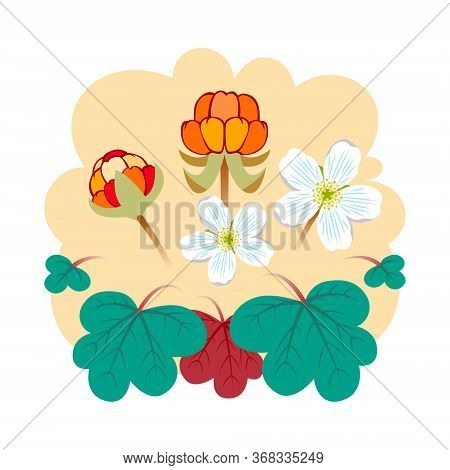 Cloudberry Vector Illustration. A Cloudberry (rubus Chamaemorus) Is A Herbaceous Plant In Tundra And