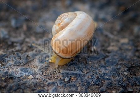 Macro Photography Of A Snail On The Road With Its Horns Out