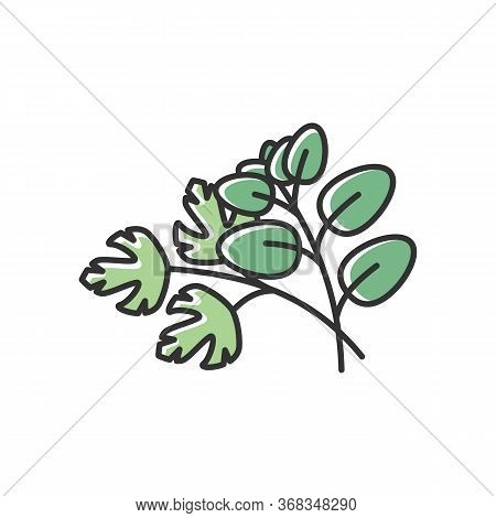Fresh Herbs Green Rgb Color Icon. Scented Fresh Vegetable. Italian Nutrient Condiment. Plant Sprout.