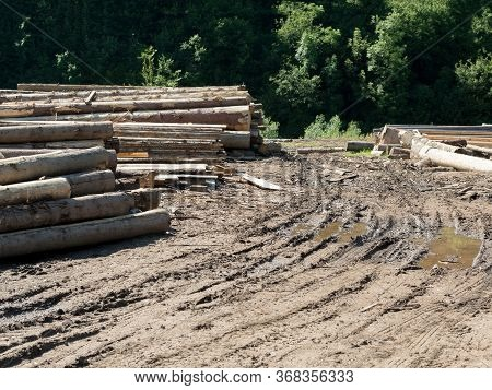 Sawmill In The Forest. Woodpiles. Cut Logs. Wheel Ruts On The Muddy Dirt Road.