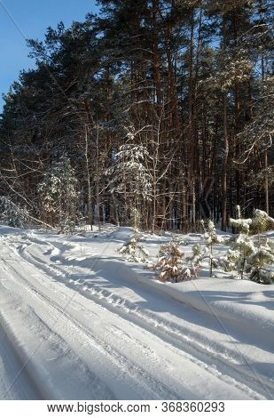 Road In A Coniferous Winter Forest In A Sunny Day. Dirt Road Covered With Snow. Wheel Ruts On The Ro