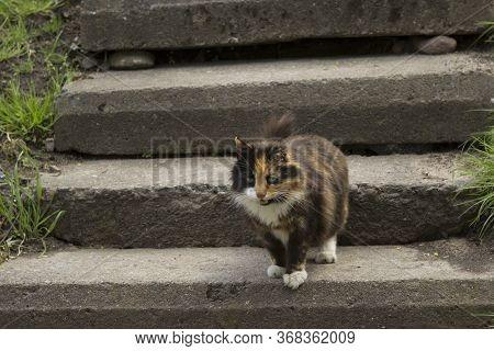 Tricolor Fluffy Cat Descends Down A Stone Staircase