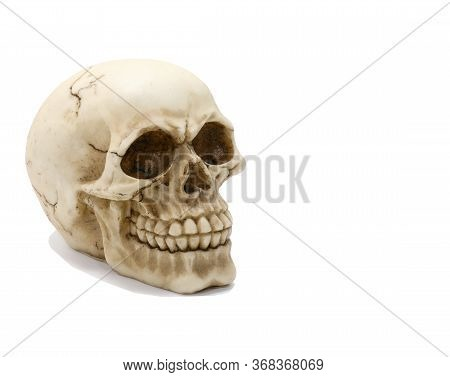 Excellent Reproduction Of A Human Skull With Clearly Visible Teeth On A White Background