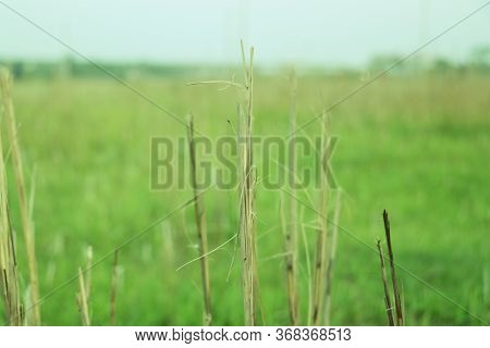 Dead Leafless Tree With Blurred Green Background